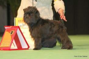 Affenpinscher Dog Show