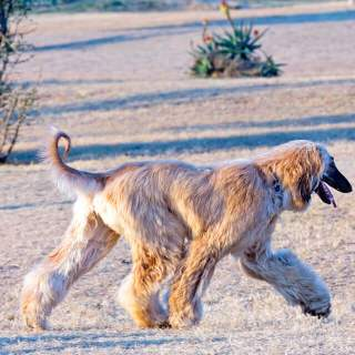 Four Best Dog Breeds For Runners