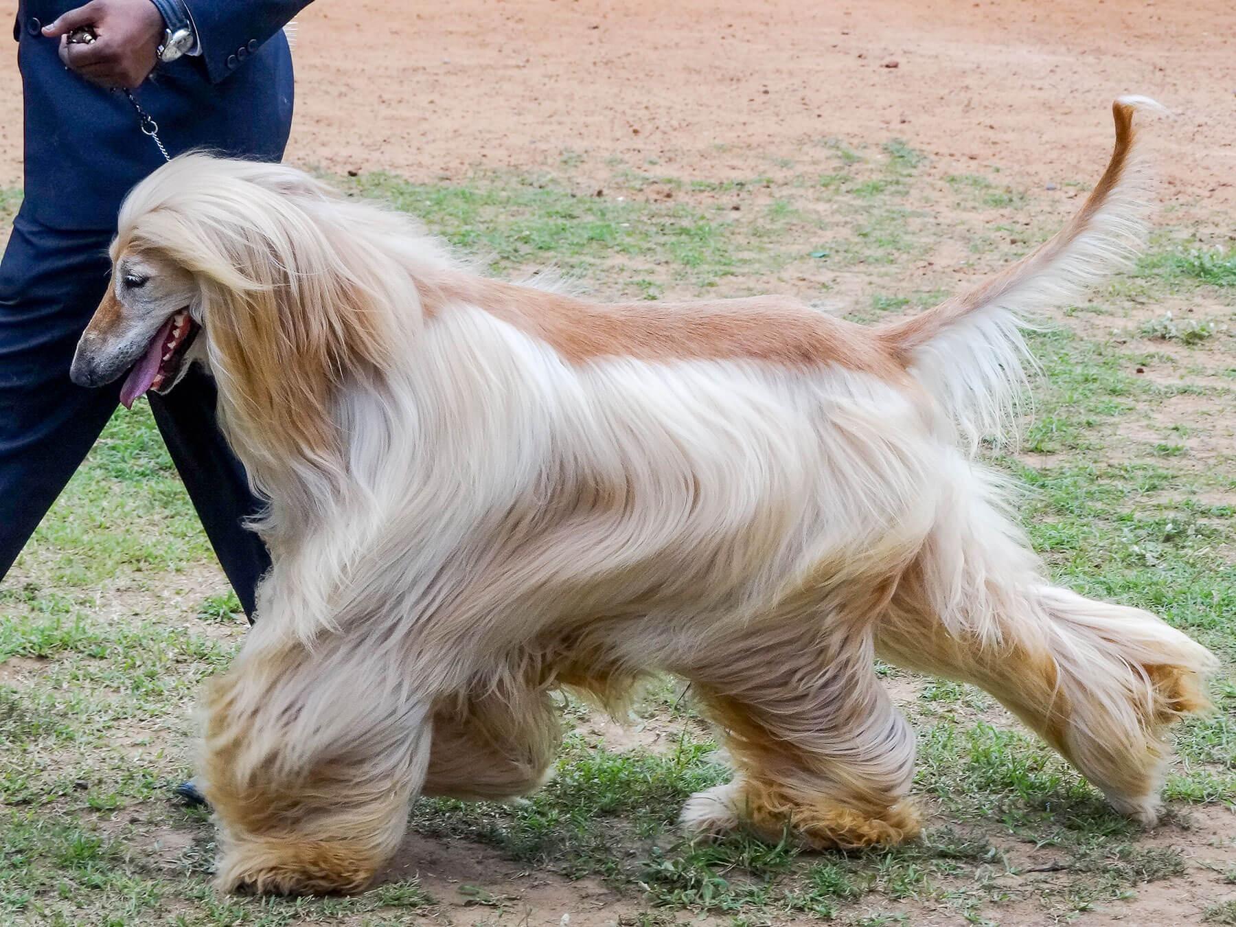 Low Maintenance Hypoallergenic Dog Breeds
