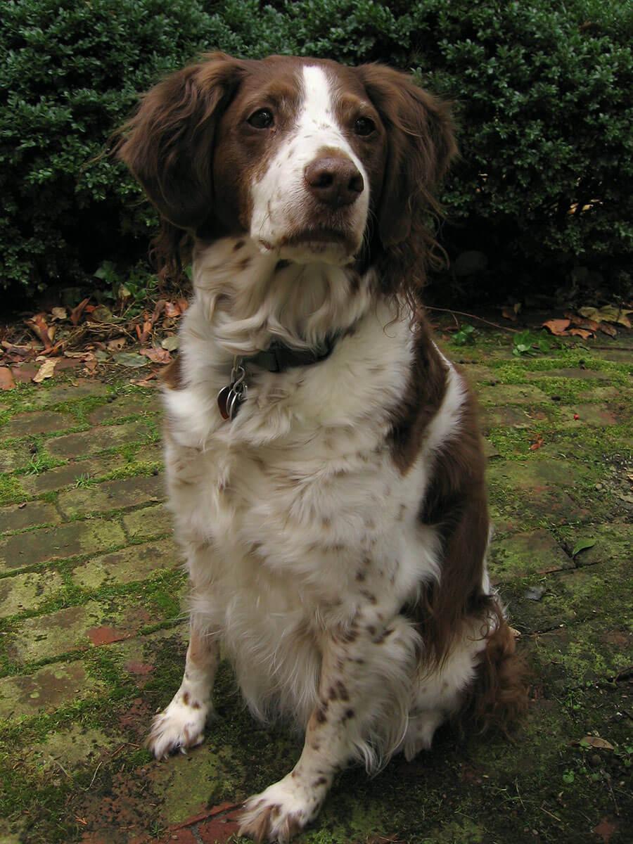European Kennel Club Dog Breeds