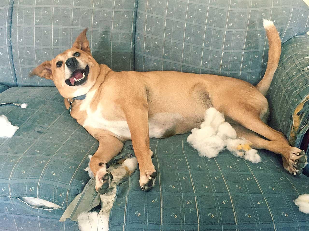 Make Dog Buff