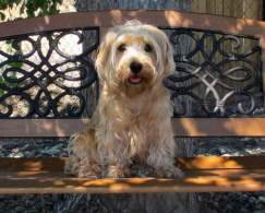 Lucas Terrier
