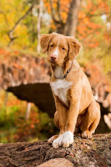 Dog Breeds From Nova Scotia