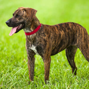 Names For Tiger Striped Dogs