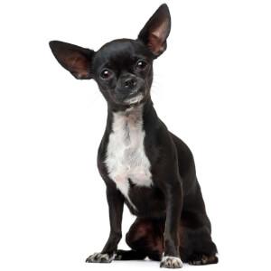 Small Black Dog Names